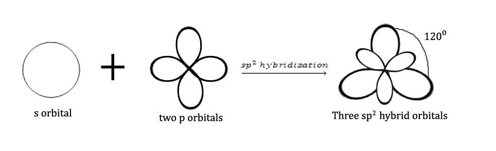 sp2 hybridization