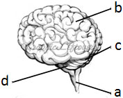 brain_educatesansar_science
